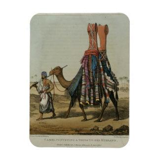 Kamel som framför en brud till henne make, inrista magnet