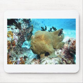 Kamouflerad Frogfish Musmatta