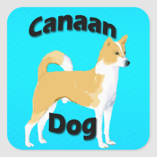 Kanaan hundturkos fyrkantigt klistermärke