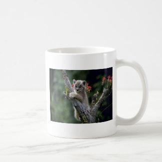 Kanada Lodjur-liten kattunge Kaffemugg