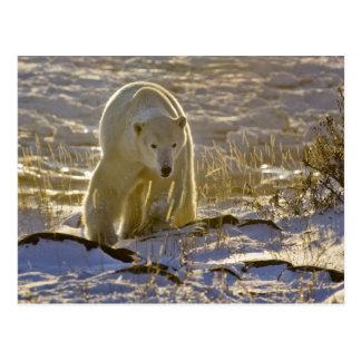 Kanada Manitoba, Hudson fjärd, Churchill. 9 Vykort
