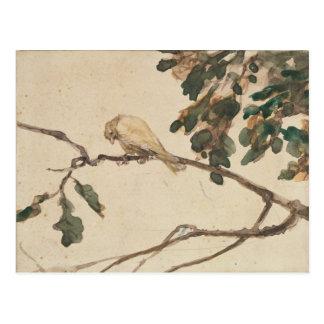 Kanariefågel på en gren för Oakträd Vykort