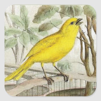 Kanariefågelvintageillustration Fyrkantigt Klistermärke