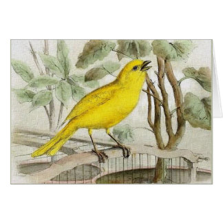 Kanariefågelvintageillustration Hälsningskort