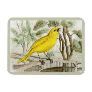 Kanariefågelvintageillustration Magnet
