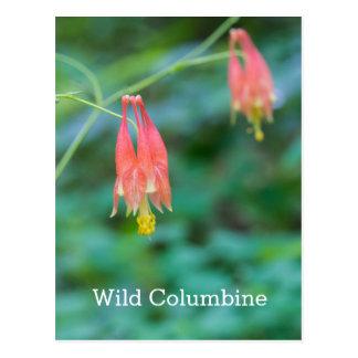 Känd vykort vildColumbine för röda vildblommar