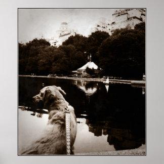 Kanfas för foto för guld- Segla-Drivhus vatten gam Affischer