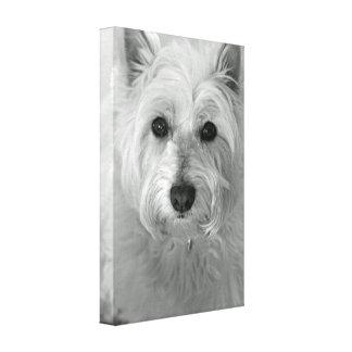 Kanfas för Westie hund (västra höglands- Canvastryck