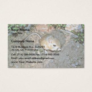 Kangeroo råtta visitkort