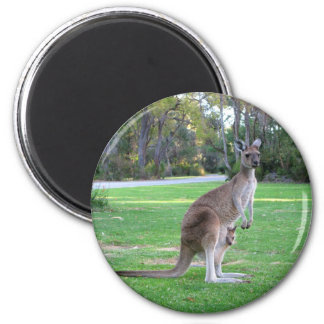 Känguru och känguruunge magnet