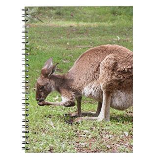 Känguru Outback Australien Anteckningsbok Med Spiral
