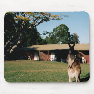 Känguru på gräsmatta mus matta