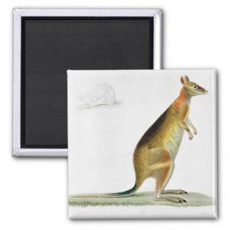 Känguru som inristas av Coutant Magnet