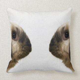 Kanin tittar kanin kudde