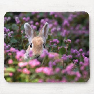Kaninlantgård Musmatta