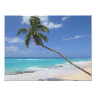 Karibisk palmträdstrand fototryck
