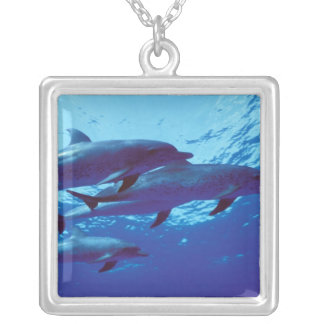 Karibiskt Bahamas prickiga delfiner Silverpläterat Halsband