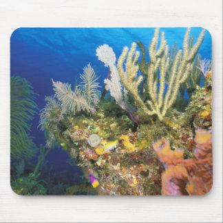 Karibiskt. Reef. Musmatta