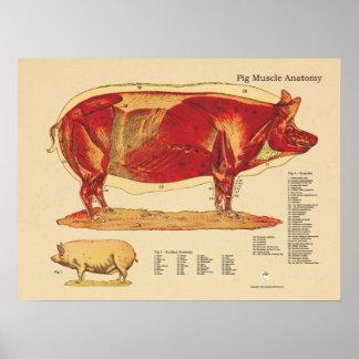 Kartlägger veterinär- muskelanatomi för gris poster