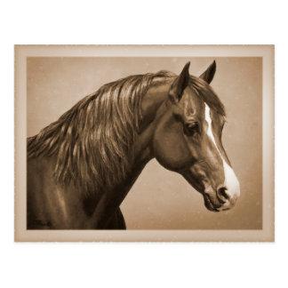 Kastanjebrun Morgan häst i Sepia Vykort