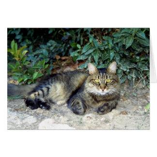 Katt Hälsningskort