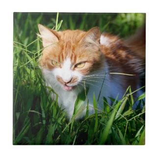 Katt i gräs kakelplatta
