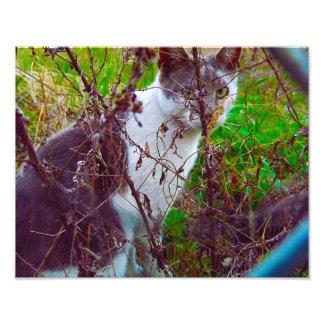 Katt i hemlighetträdgård fototryck