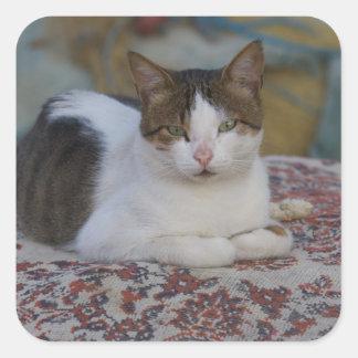 Katt i Marina av Kusadasi längs det Aegean havet, Fyrkantigt Klistermärke