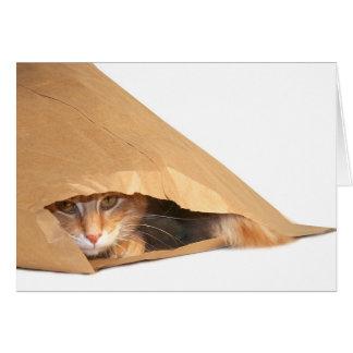 Katt i säckhälsningkortet hälsningskort