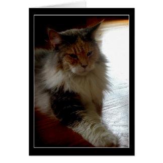Katt i soligt kort för fönsterfotohälsning