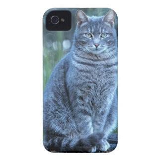 Katt iPhone 4 Hud