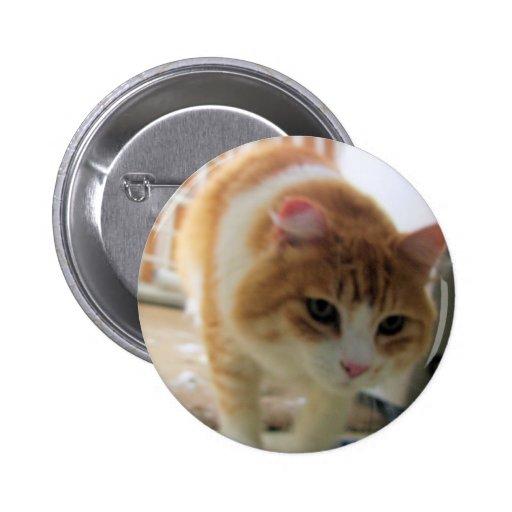 katt knappar med nål