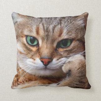 katt med inställning kudde