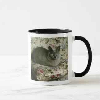 Katt Minnie, Tonkinese. Mugg
