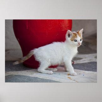 Katt Mykonos, Grekland Poster