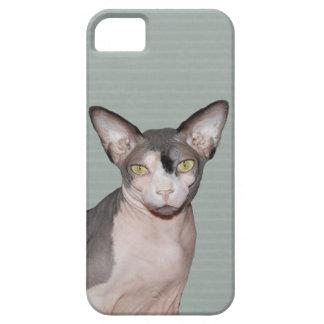 katt Ninja för fodral | Sphynx för iPhone 5 iPhone 5 Cover