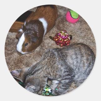 katt och försökskanin runt klistermärke