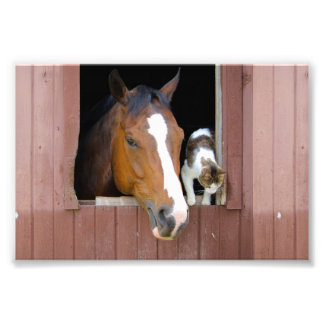 Katt och häst - hästranch - hästälskare fototryck