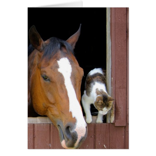 Katt och häst - hästranch - hästälskare OBS kort