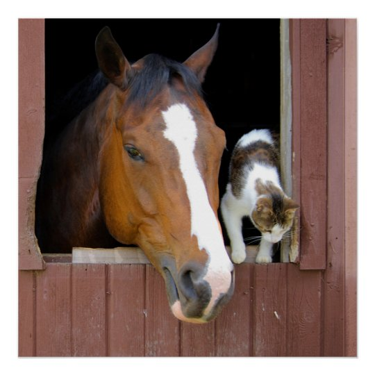 Katt och häst - hästranch - hästälskare poster