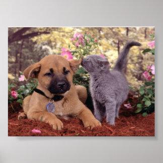 katt och hund poster