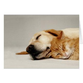 Katt och hund som tillsammans sovar… hälsningskort
