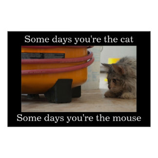 Katt- och musDemotivational affisch
