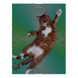 Katt på hypnotisk bakgrund vykort