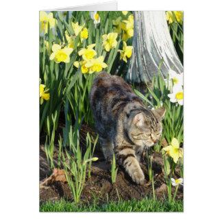Katt, skinn eller lek, födelsedag hälsningskort