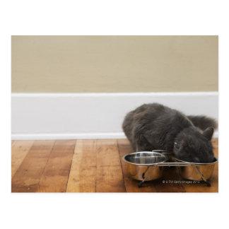 Katt som äter från bunken vykort