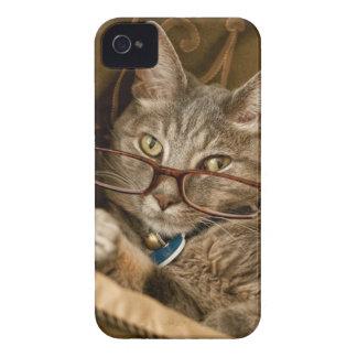 Katt som ha på sig fodral för iPhone 4 skal