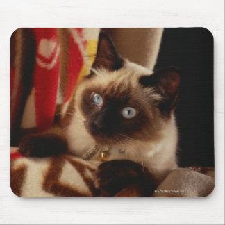 Katt som kikar till och med täcke musmatta