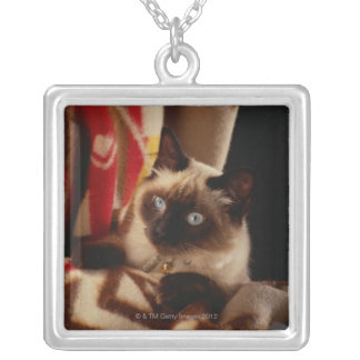 Katt som kikar till och med täcke silverpläterat halsband