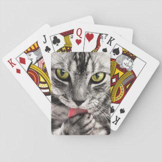 Katt som leker kort casinokort